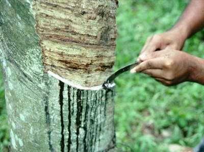 我国天然橡胶产业酝酿升级